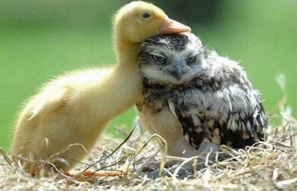 duck-friendship