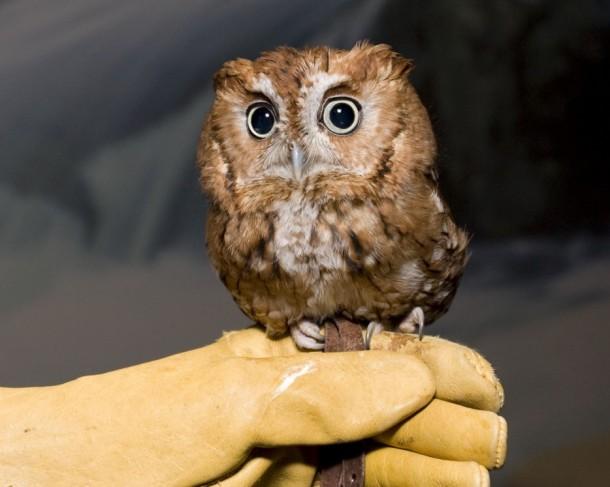 stoic-owl