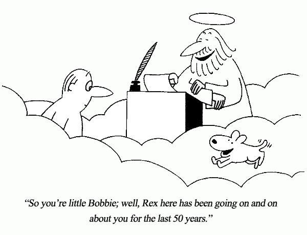 Dog-Heaven
