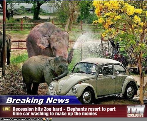 funny-elebphants-breaking-news