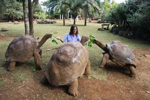 6mpmd-tortoise-food