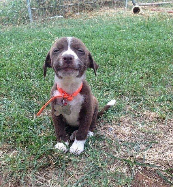 8slh6-happy-puppy