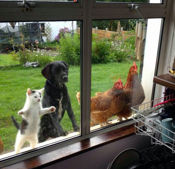 funny-animal-outside-door-let-me-in-coverimage1