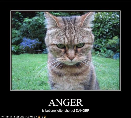 funny-pictures-your-cat-is-angry-and-dangerous