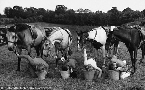 horse-swap