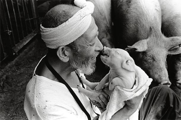 pig_farmer_cerdo_granjero_toshiteru_yamaji