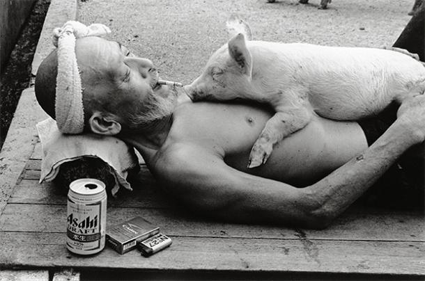 pig_farmer_cerdo_granjero_toshiteru_yamaji5