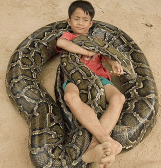 Kid-Lay-Down-On-Snake-Funny-Dangerous-Picture