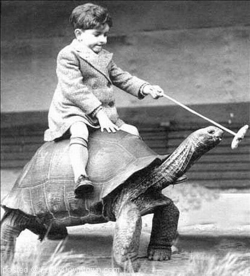 Kid-Riding-Tortoise-Funny-Vintage-Image