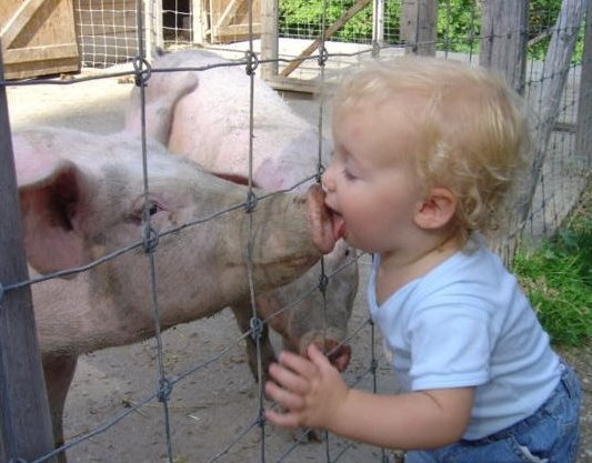 Funny-Pig-21